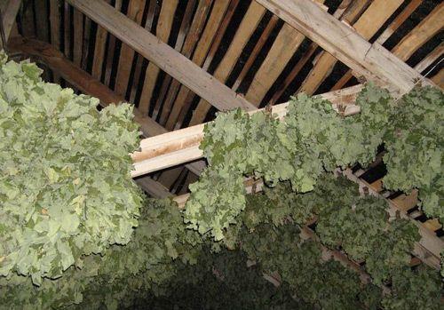 Хранение веников под крышей дома или бани